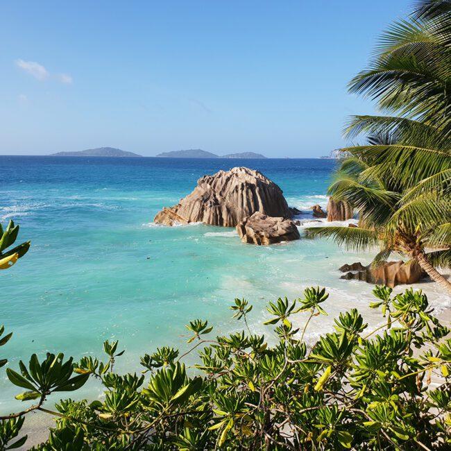 Seychellen Traumstrand mit Palmen
